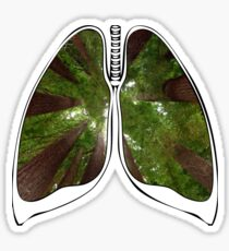 Lungs - Redwood Forest Sticker