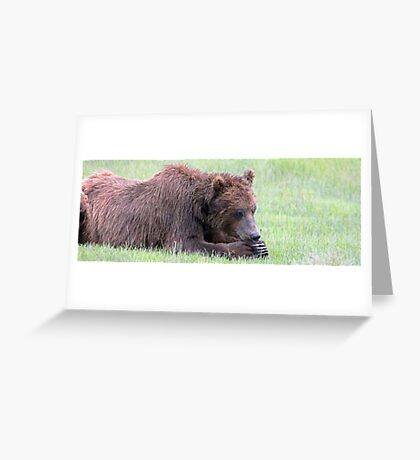 Ohmmmm... Meditating or Catching A Bear Nap? Greeting Card