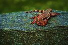 Lizard  by Joshua Greiner