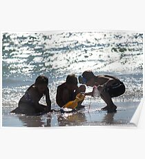 Summertime Fun at the Beach Poster