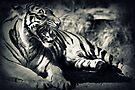 Sumatran Tiger by Joshua Greiner