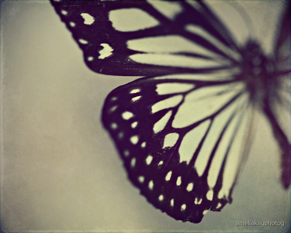 Black and White Wing by ameliakayphotog