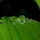Dewy Green Leaves by Joe Mortelliti