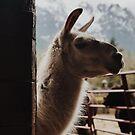 Backyard Llama by ToastCrumbs