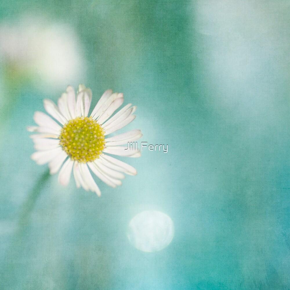 Daisy Love by Jill Ferry