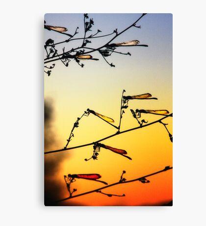 Sunset Dragonflies Canvas Print