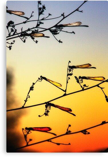 Sunset Dragonflies by Bob Larson