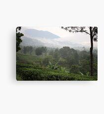 Gunung Mas Tea Gardens Canvas Print