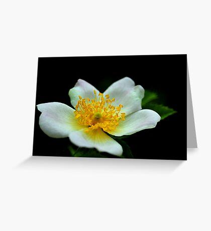 Macro 2699 Greeting Card