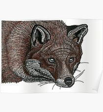 Red Fox Pen Drawing Poster