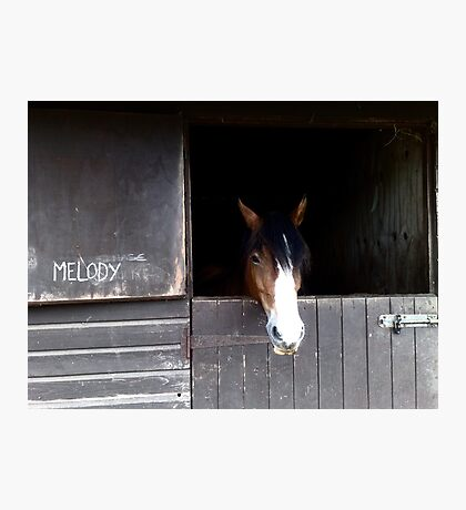 Melody Photographic Print