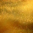 Fields of Gold.. by eithnemythen