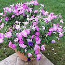 Purple Petunia Pot by Julie Miles