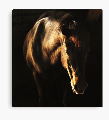 Sunshine in the dark Canvas Print
