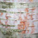 wood bruise by yvesrossetti