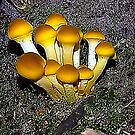 Yellow Mound of Fungi by Colleen Rohrbaugh