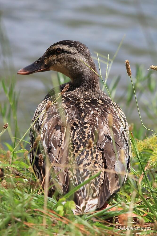 Female Duck by DebbieCHayes