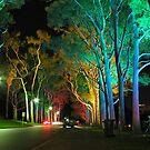 Kings Park Lights by Stephen Horton