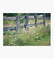 Split rail and daisies Photographic Print
