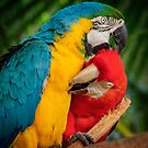 Macaws - Necking by Karen Duffy