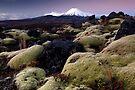 Mountain Mosses by Michael Treloar