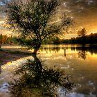 Sunset Tree by Bob Larson