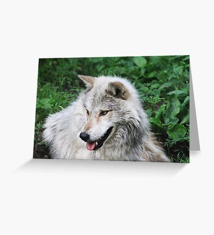 Grisham the Gray Wolf Greeting Card