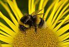 Clean bee by inkedsandra
