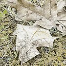 The Fall Frost by vasasphoto