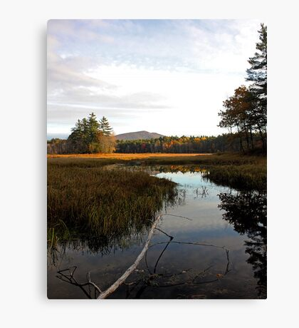 Autumn - Brownfield Bog Canvas Print