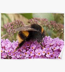 Bumble Bee Moment Poster