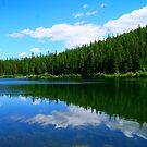 Lion Lake  by Borror