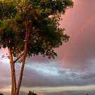 Blushing Skies by Sue  Cullumber
