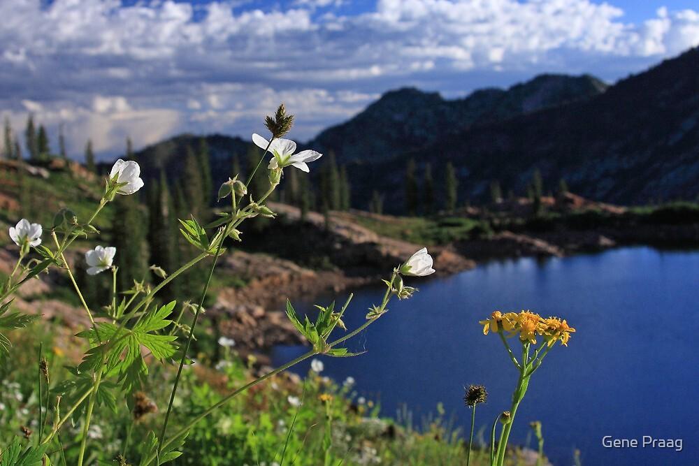 Mountain Wildflowers by Gene Praag