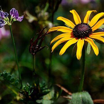 Wildflowers by AnnaRose