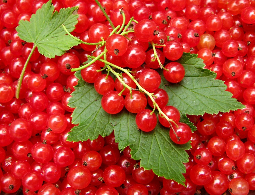 Market: Red currant  by JuliaPaa