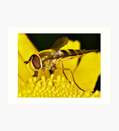 Pollination 3 Art Print