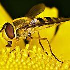 Pollination 3 by Gareth Jones