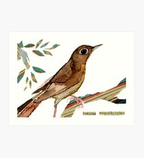 Luscinia megarhynchos (Nightingale) Art Print