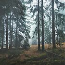 Deep In The Woods von Tordis Kayma