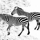 Zebra ART by ienemien