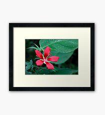 Scarlet Hibiscus Flower Framed Print