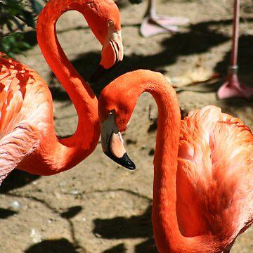 Pink Flamingos by Misawalk