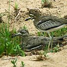 Water thick knee by Anthony Goldman