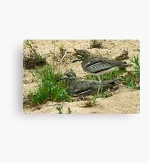 Water thick knee Canvas Print