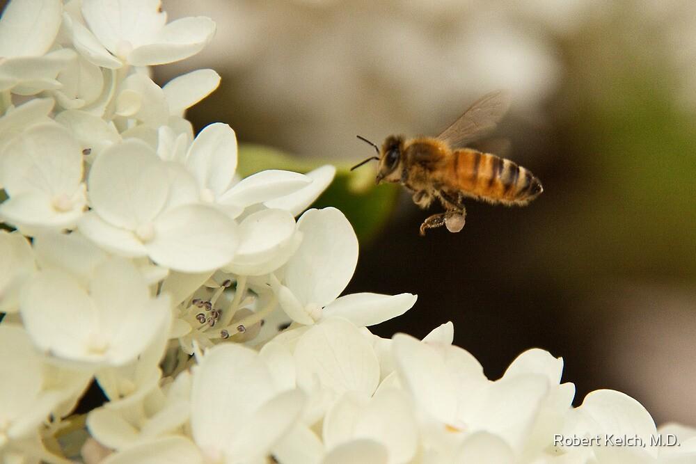 Bee in flight by Robert Kelch, M.D.