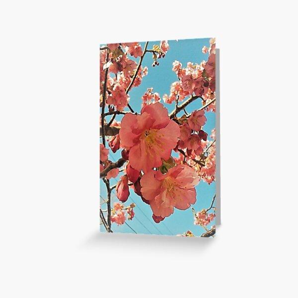 Sakura Kirschblüte Muster Grußkarte