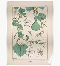 Plante et Ses Applications Ornementales Ornamental Plants Grasset Eugene Maurice Pillard Verneuil 1896 Art Nouveau 0031 Gourd Poster