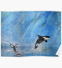 The Orkas - blue waters - natural world Poster