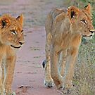 Young  siblings in synch(Do you you think dad will mind if we go down there?) by Anthony Goldman